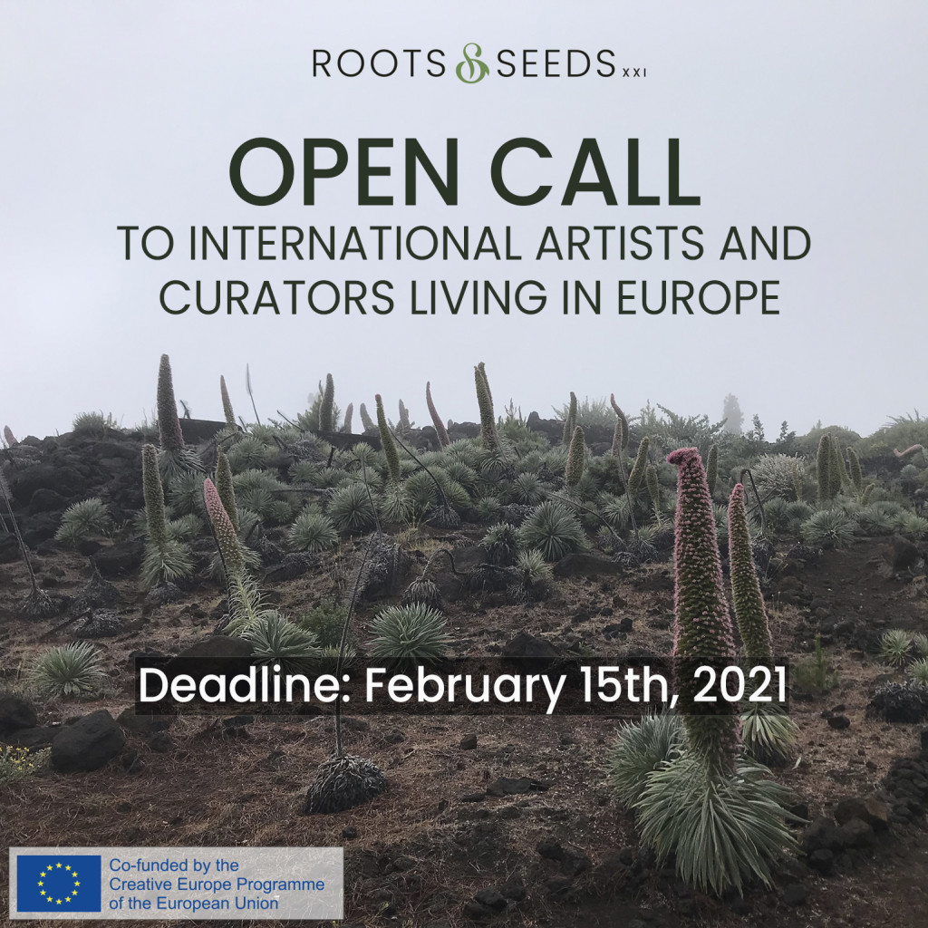 IG anuncio ROOTS AND SEEDS OPEN CALL